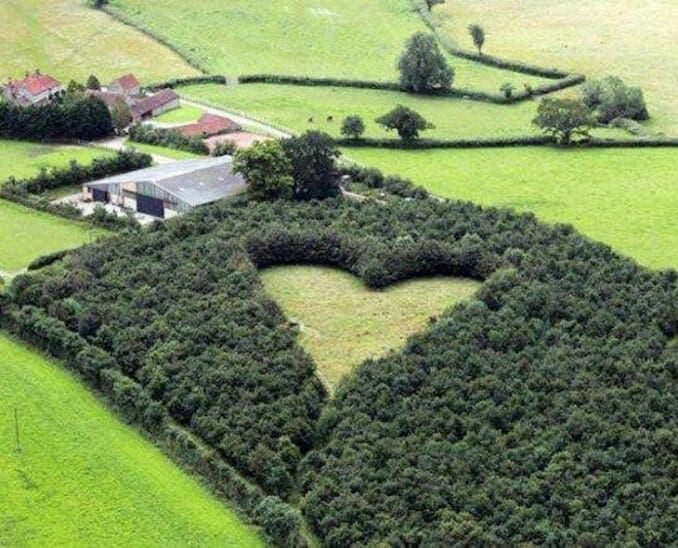 un homme plante 6000 arbres