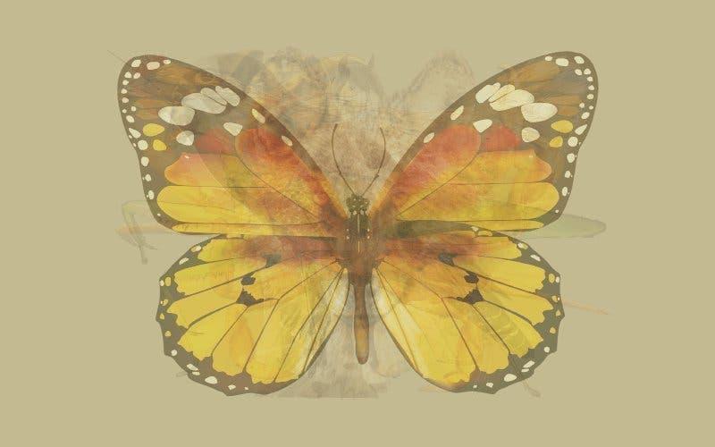 Un papillon 1