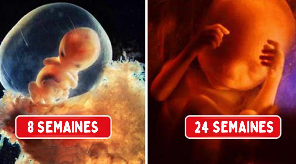 Un photographe capture chaque étape de la conception à l'accouchement et le résultat est à couper le souffle