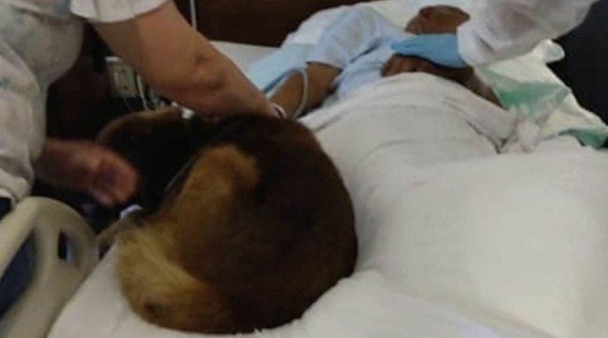 Un sans-abri sauvagement battu pleure avant de mourir avec son chien à ses côtés