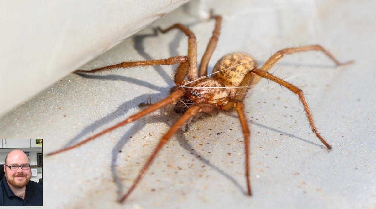 Un scientifique affirme qu'il ne faut pas tuer les araignées dans votre maison
