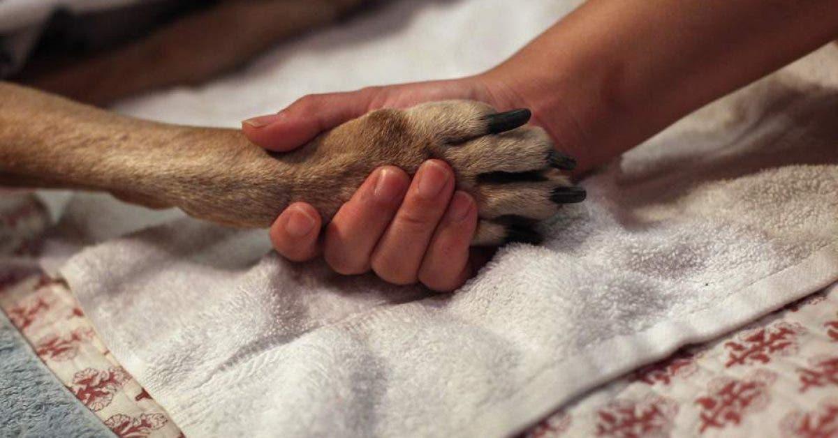 Un veterinaire chagrine revele ce que font les animaux de compagnie avant detre euthanasies 1