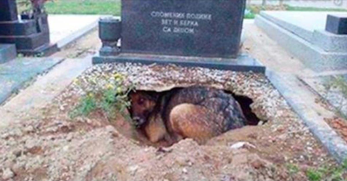 Une chienne refuse de s'éloigner d'une tombe. Une femme s'approche d'elle et découvre l'incroyable vérité