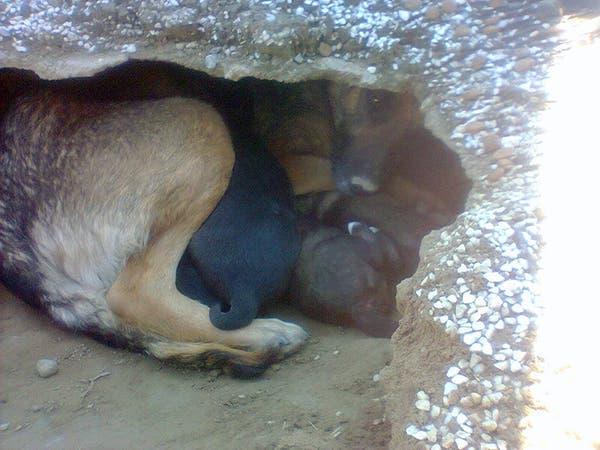 Une chienne refuse de s'éloigner d'une tombe