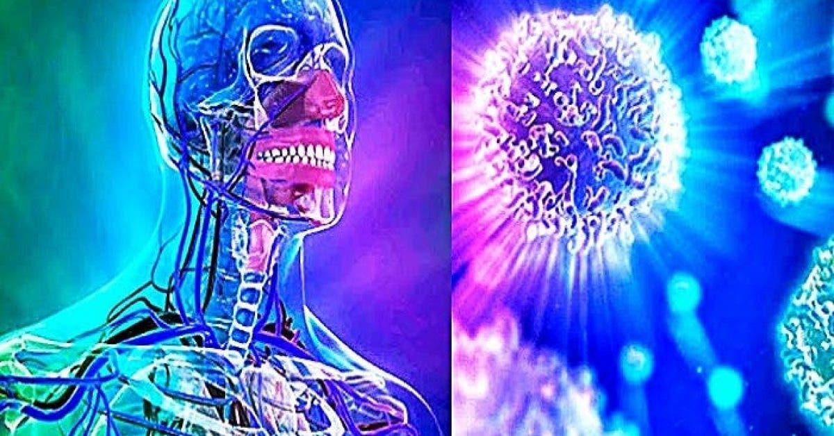 Une étude révèle que le jeûne pendant 72 heures peut régénérer l'ensemble du système immunitaire