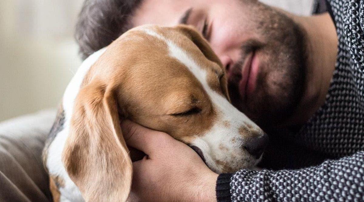 Une nouvelle étude prouve que nous préférons les chiens aux humains