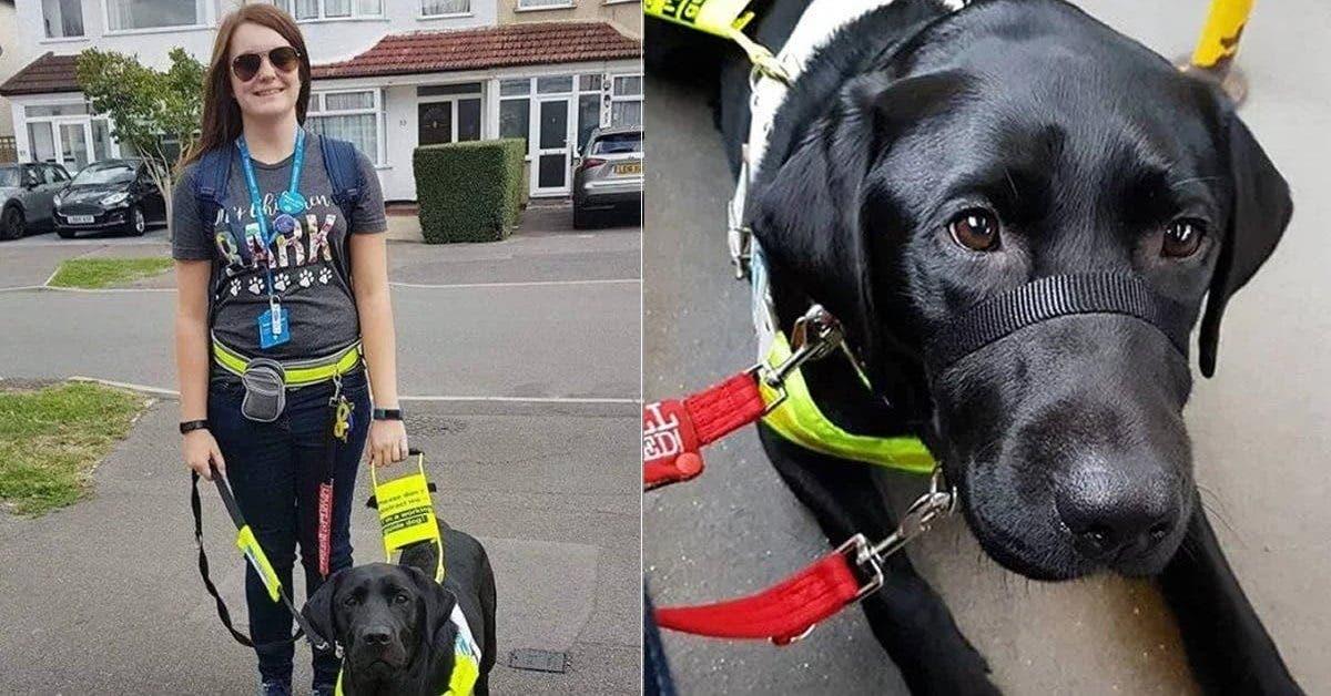 Une passagère furieuse demande à une femme malvoyante de faire descendre son chien du bus