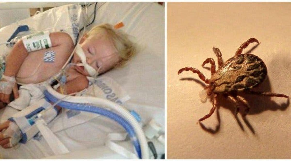 Une petite fille de 2 ans est morte après avoir joué dehors – sa famille met en garde contre ce virus mortel
