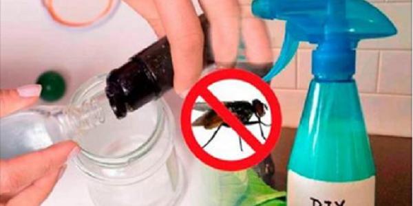 Utilisez ce produit fait maison et dites adieu aux mouches pour toujours