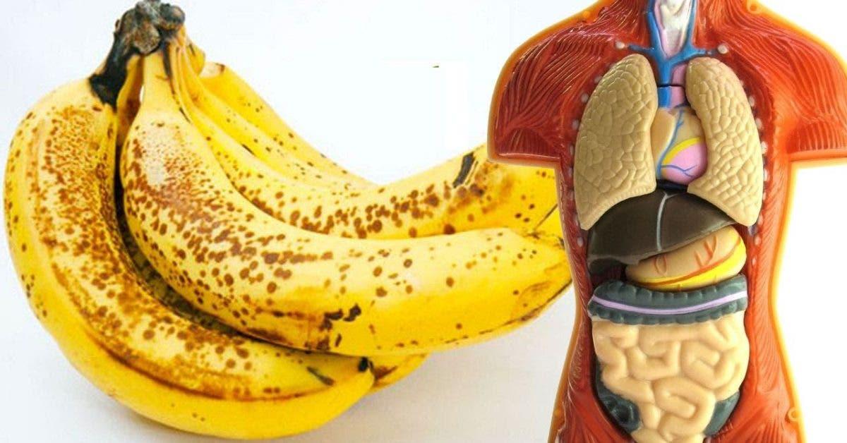 la graisse abdominale