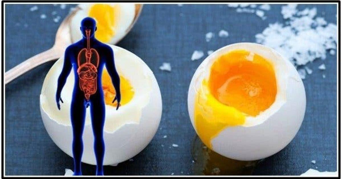Voici ce qui arrive à votre corps en mangeant 2 œufs par jour… Vous serez surpris !!