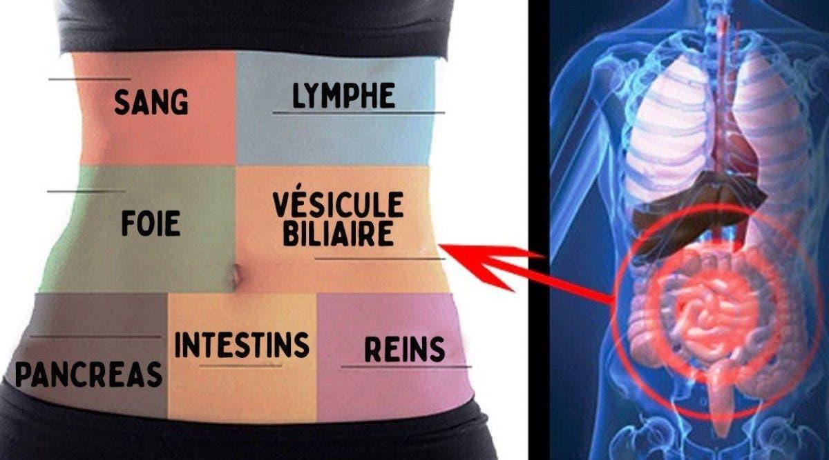 Voici comment détoxifier chaque organe pour ne plus jamais être malade ou fatigué