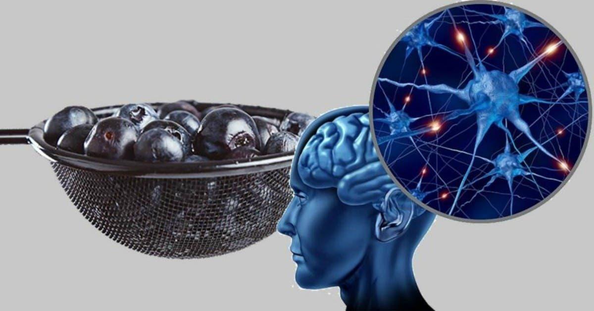 Voici comment développer de nouvelles cellules cerveau à tout âge