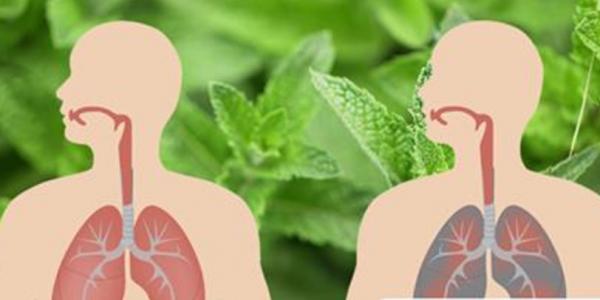 Voici comment éliminer le mucus et tuer les infections pulmonaires naturellement