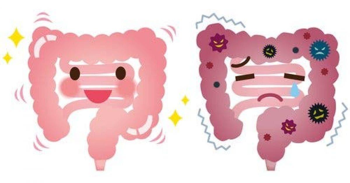Voici comment évacuer des kilos de déchets de vos intestins