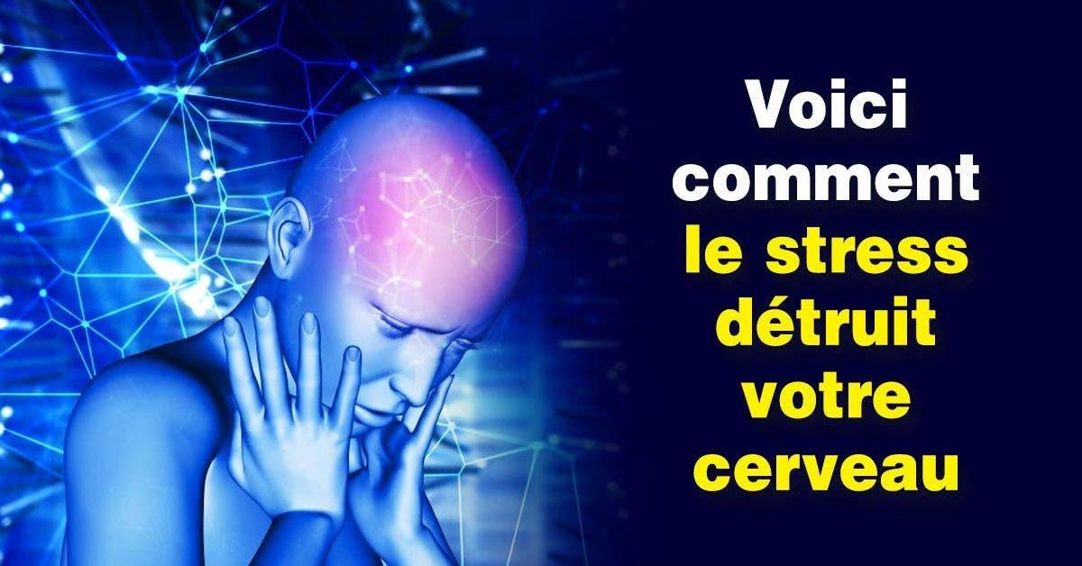 Le stress est dangereux pour votre cerveau : comment le gérer efficacement
