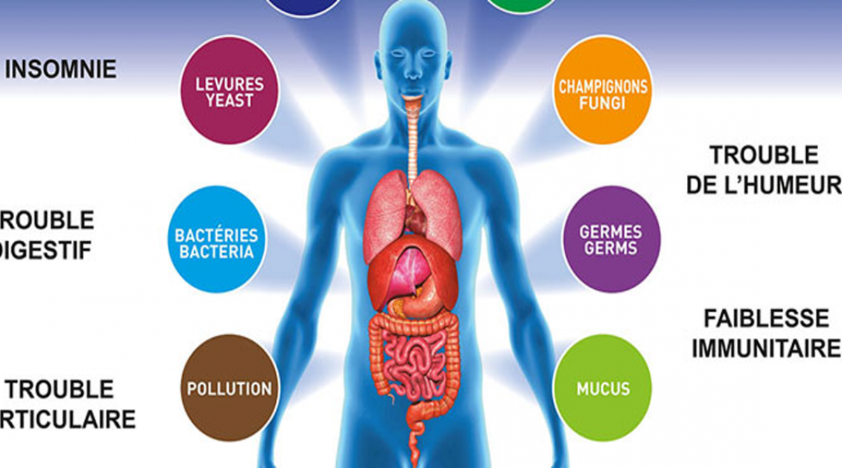 Voici comment nettoyer votre corps des toxines pour ne plus être fatigué