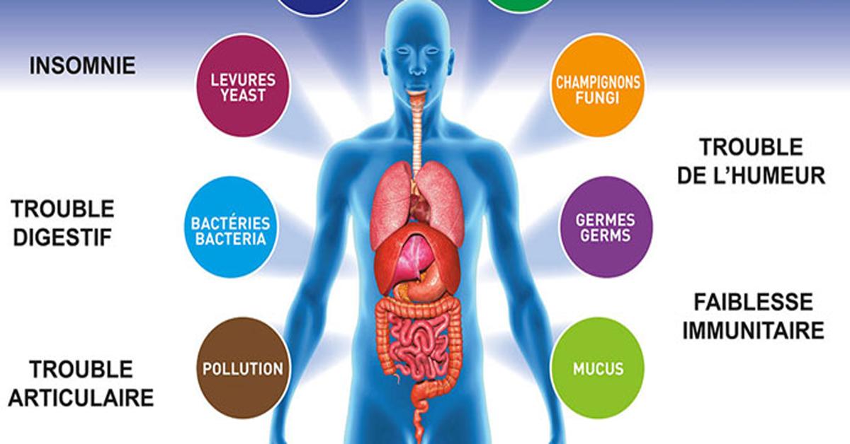 toxine dans le corps