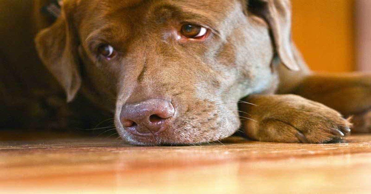 Voici pourquoi les gens qui pleurent la mort d'un animal doivent être pris au sérieux