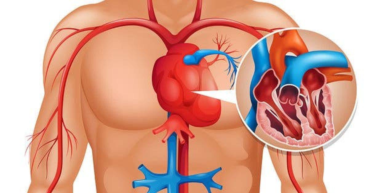 Votre corps vous prévient un mois avant d'avoir une crise cardiaque