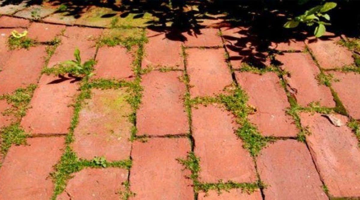 Vous avez un problème avec les mauvaises herbes ? Voila une astuce géniale pour les éliminer