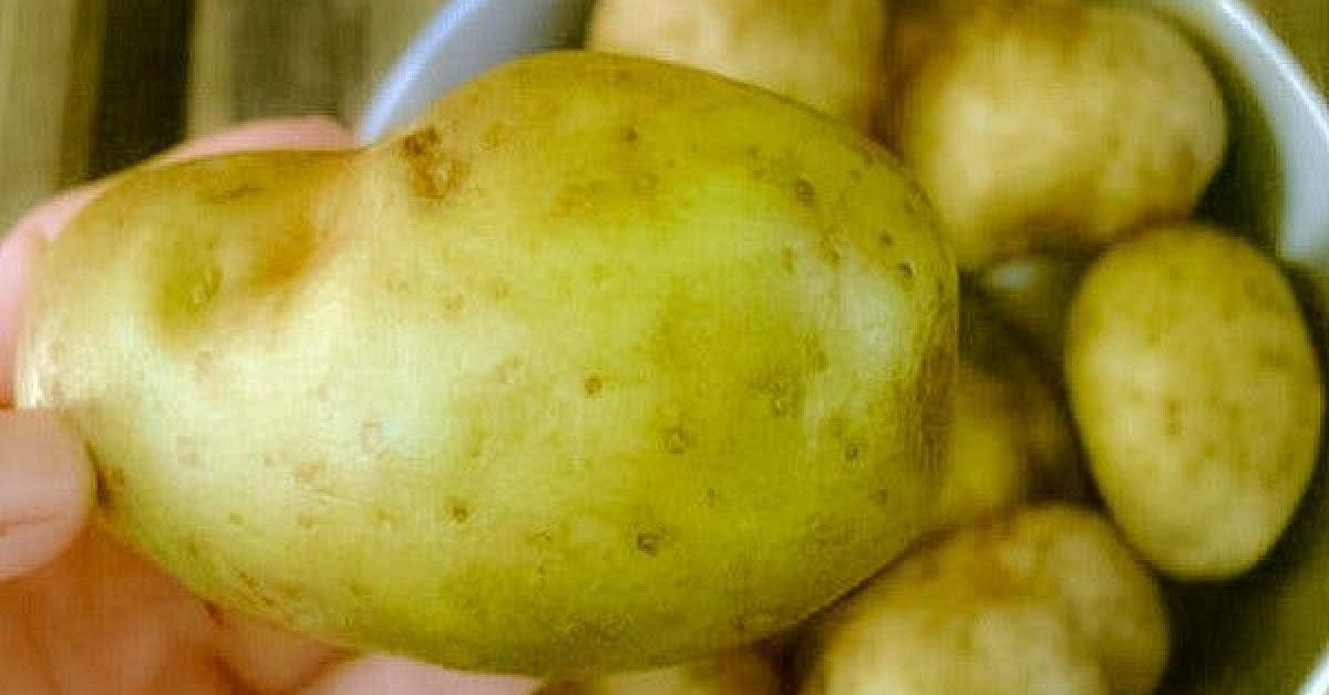 WARNING If You Notice THIS On Your Potatoes Throw Them Out Immediately. It Could Save Your Life… 1 1
