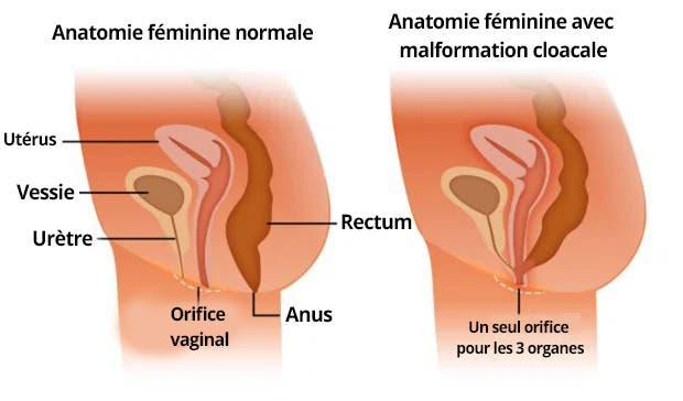 anatomiefemme