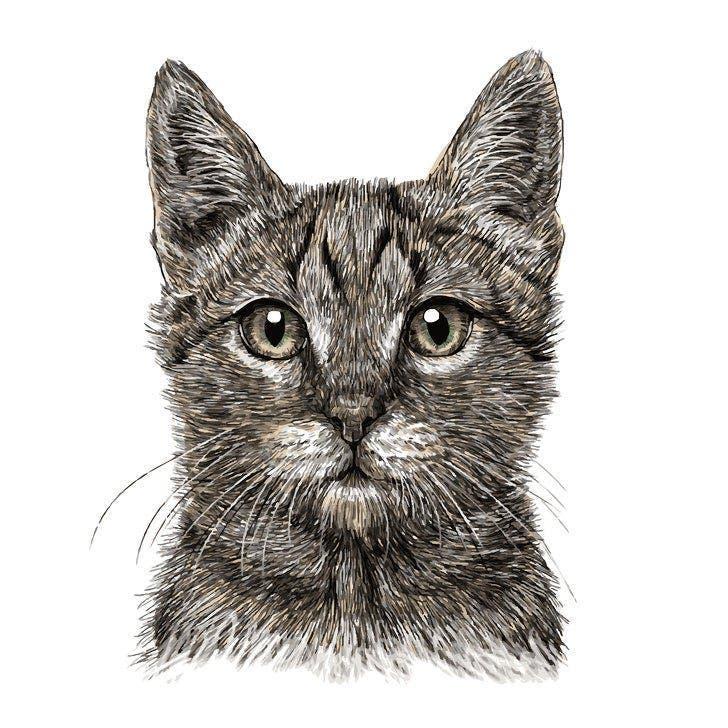 L'animal que vous voyez en premier révèle beaucoup de choses sur votre personnalité