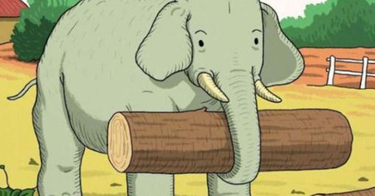 Pouvez-vous retrouver l'animal caché à côté de l'éléphant ?