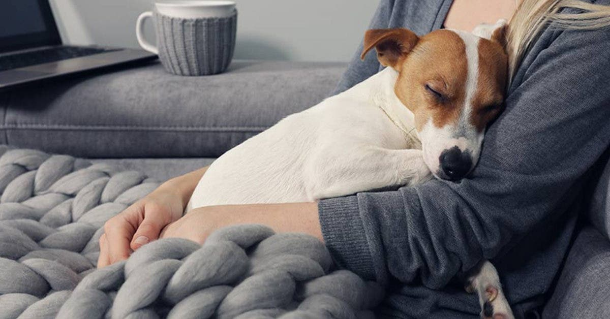 Est-ce bien ou mal de traiter son animal de compagnie comme son propre bébé ?