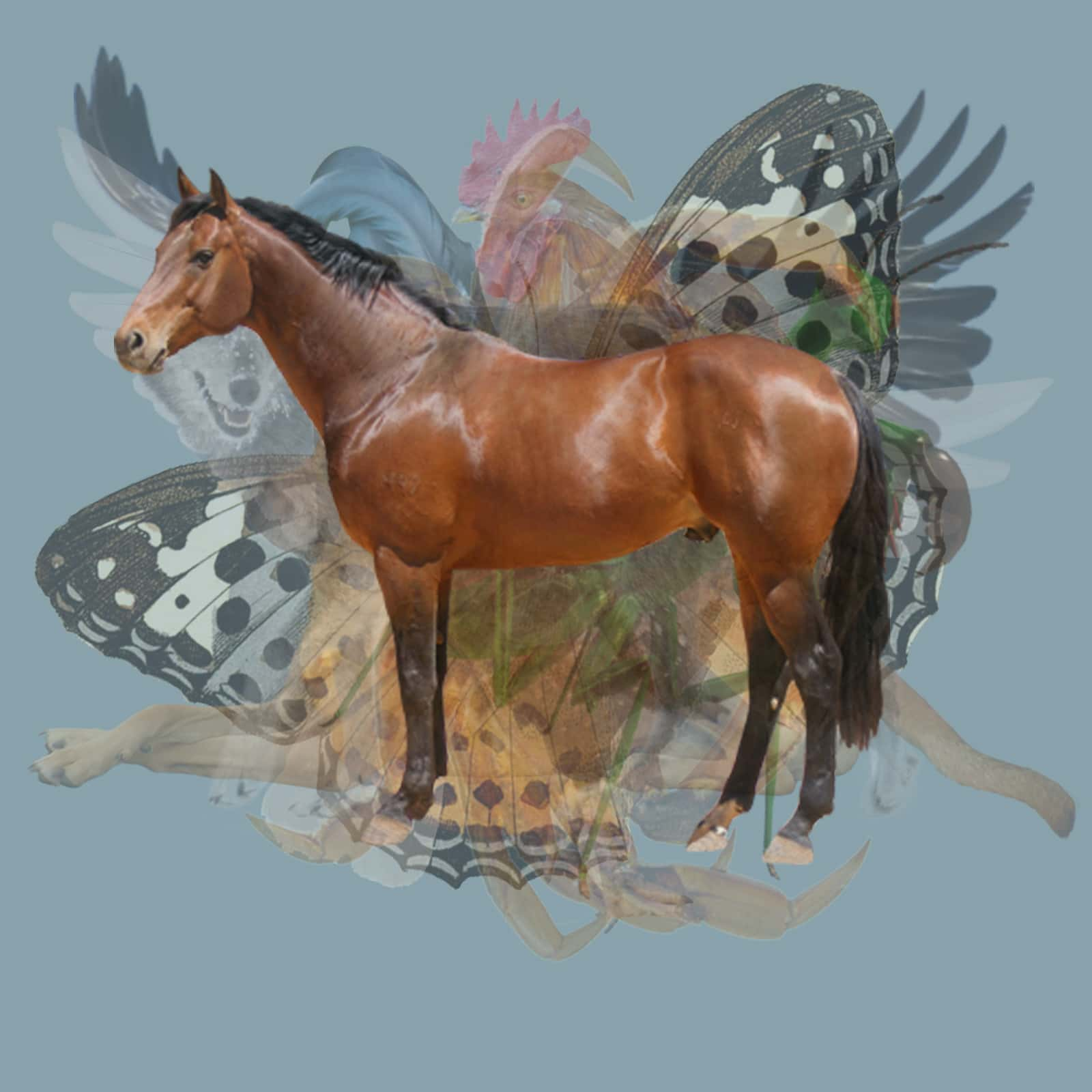 Le premier animal que vous apercevez, révèle l'aspect caché de votre personnalité