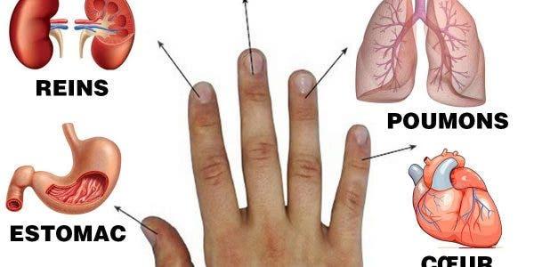 apprenez-a-traiter-vos-problemes-de-sante-en-massant-vos-doigts