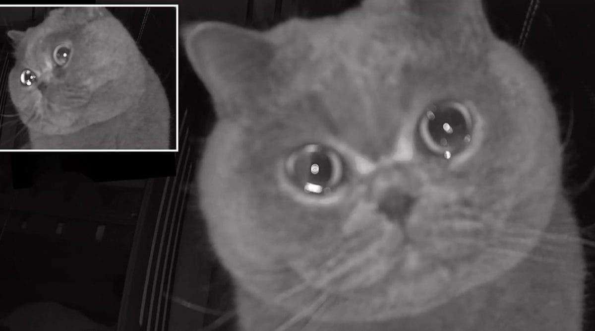 apres-avoir-ete-laisse-seul-ce-chat-qui-semble--pleurer--emeut-les-internautes-video