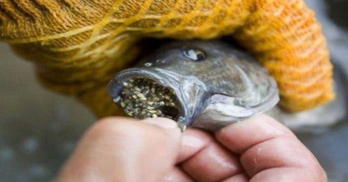 arretez de manger ce poisson les raisons vont vous degouter 1