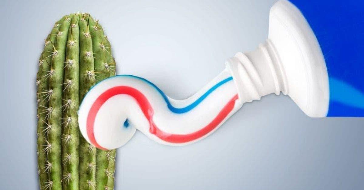 pénis dentifrice