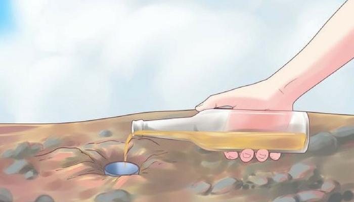 arroser vos plantes