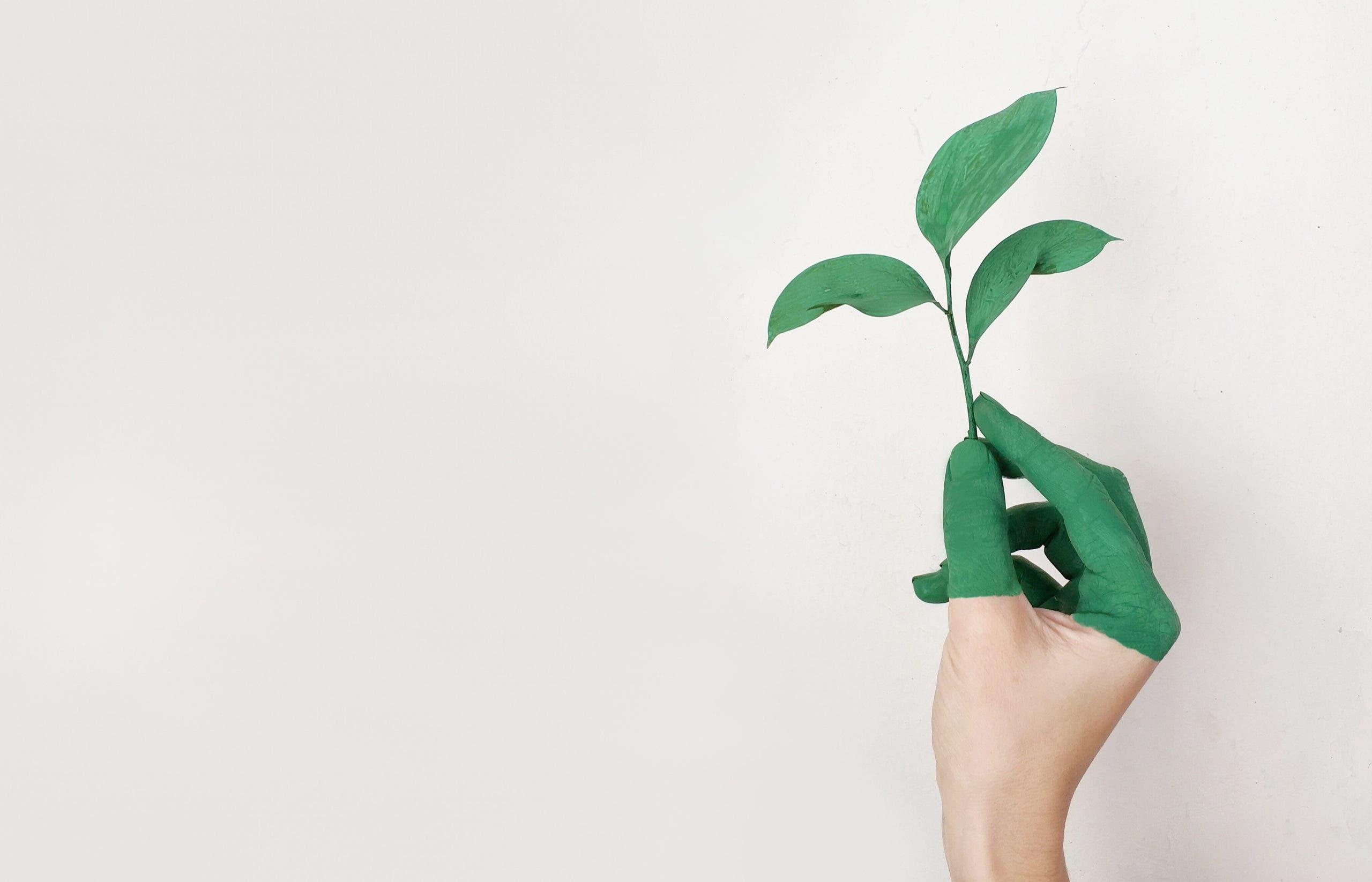 aspirine croissance plante