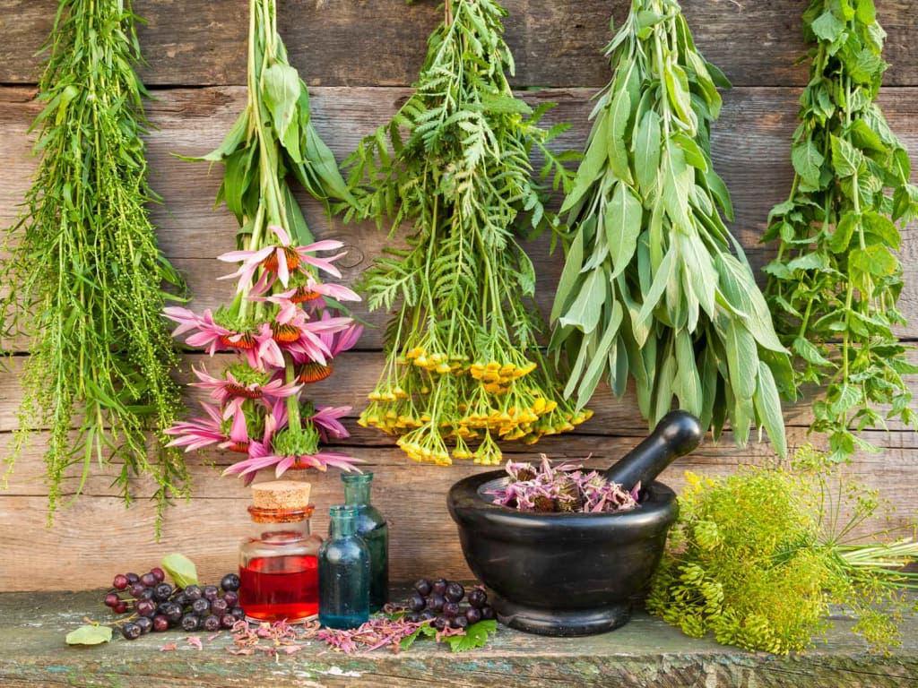 assortiments plantes
