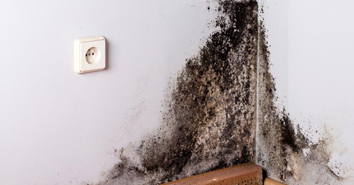 3 astuces efficaces pour éliminer la moisissure noire des murs en 5 minutes