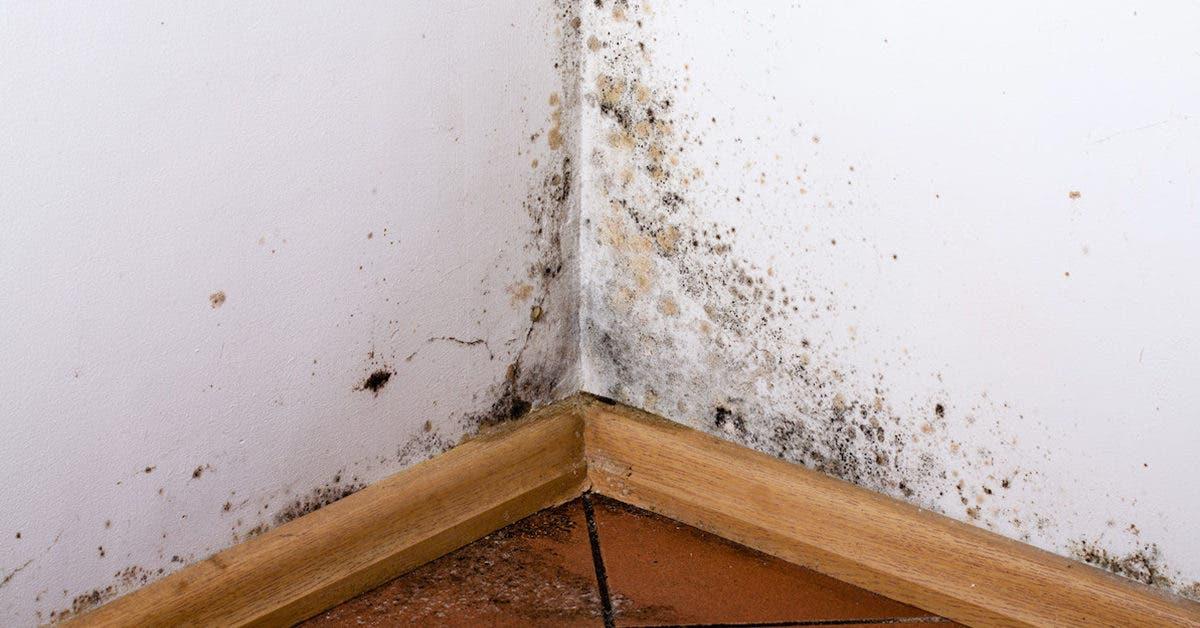Que faire si vos murs sont pleins de moisissures ? 3 astuces imparables