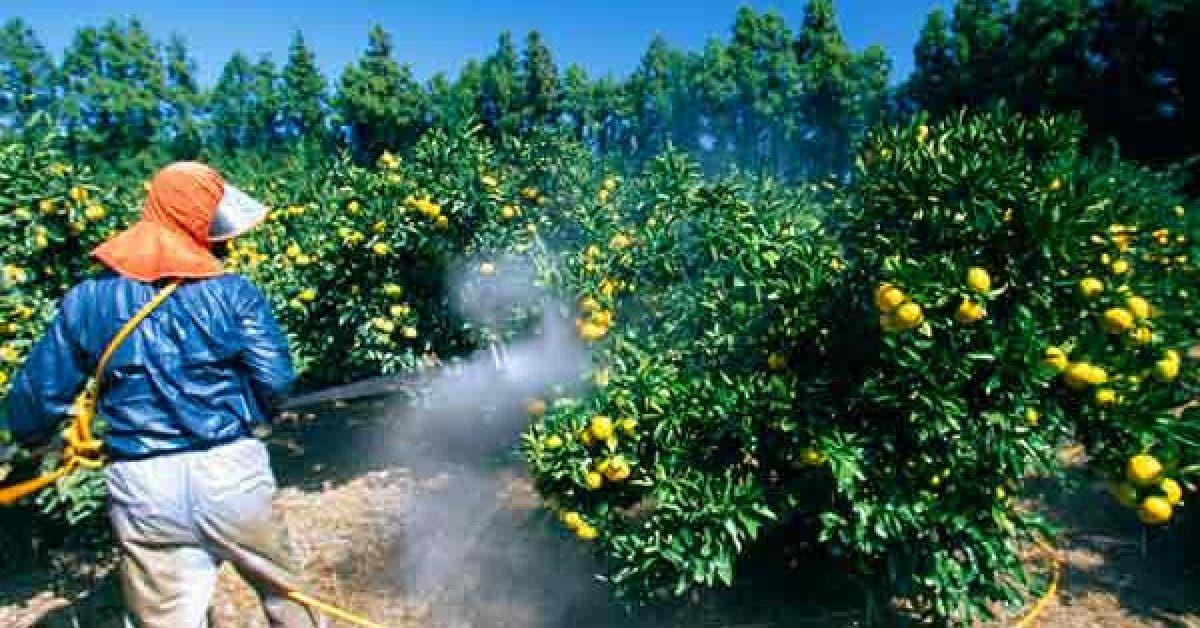 attention a ce que vous mangez voici les fruits et legumes qui contiennent le plus de pesticides 1