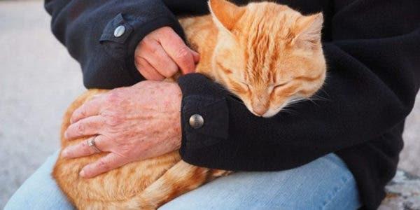 avoir-un-chat-est-bon-pour-la-sante--cest-bon-pour-votre-coeur-il-eloigne-le-stress-et-la-depression