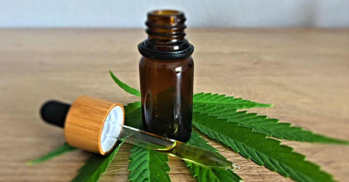 Pourquoi utiliser l'huile de cannabidiol ? Nos avis et conseils