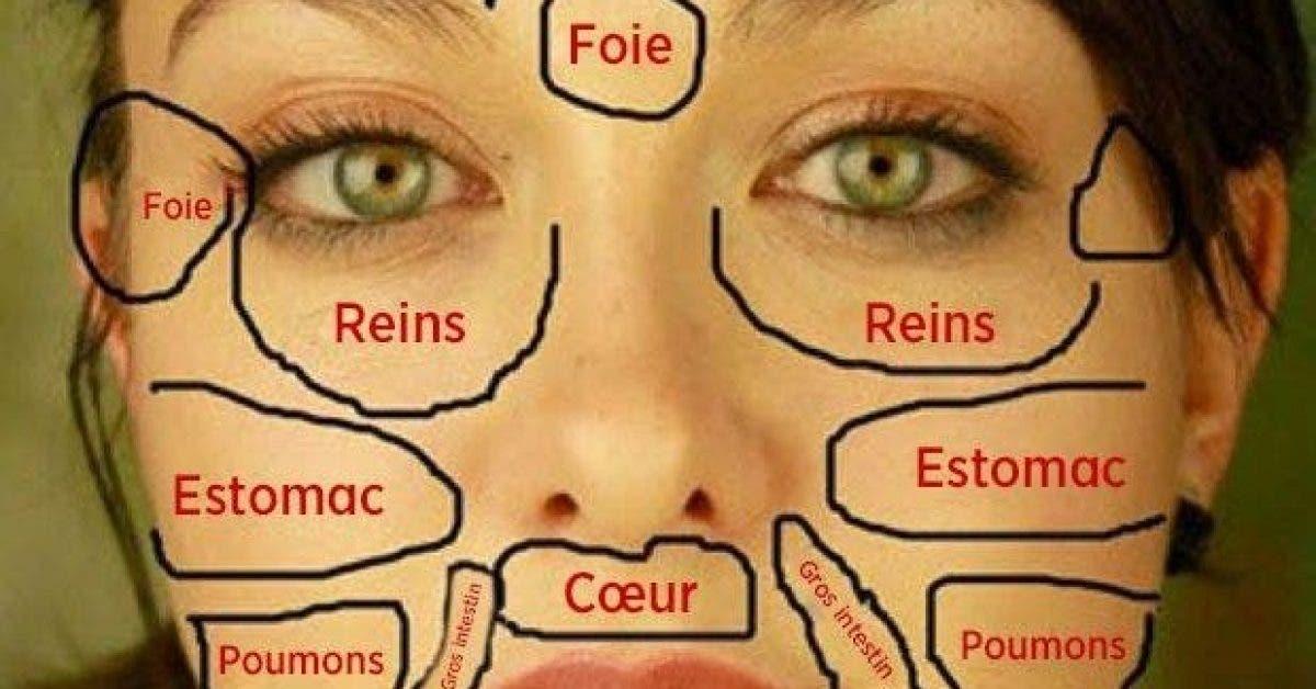 carte du visage chinoise quand les problemes de peau revelent letat des organes vitaux du corps 1