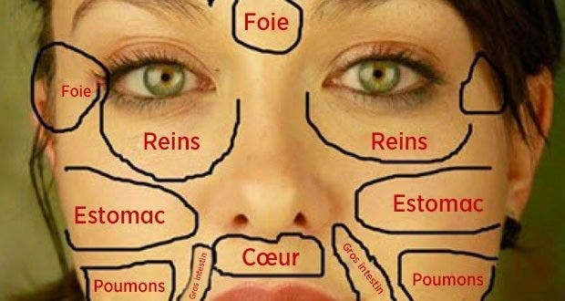 carte du visage chinoise quand les probl mes de peau r v lent l tat des organes vitaux du corps. Black Bedroom Furniture Sets. Home Design Ideas