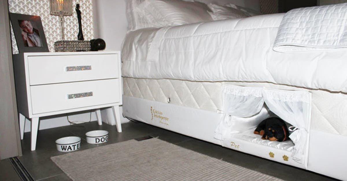 ce lit contient un lit pour que votre chat ou votre chien dorme a cote de vous 1