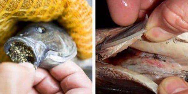 Les médecins préviennent : ce poisson est dangereux pour votre santé !