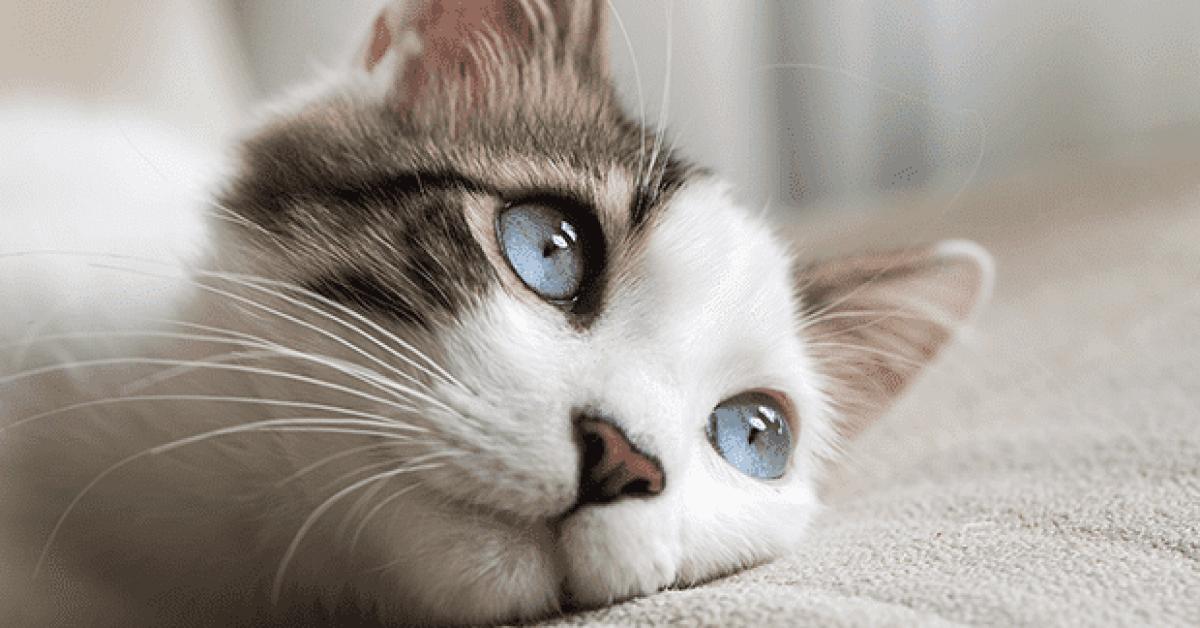 ce que vous ne savez pas sur le chat1 1