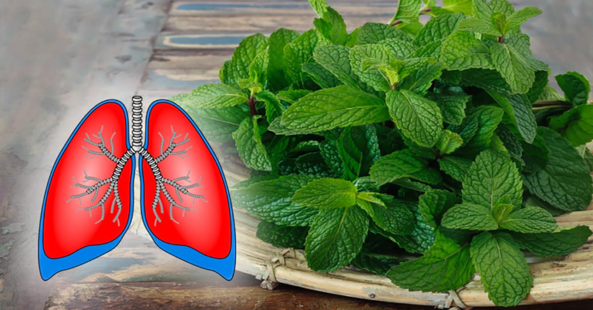 ces 10 plantes etonnantes nettoient vos poumon et soigne la bronchite lasthme et la toux 1 1