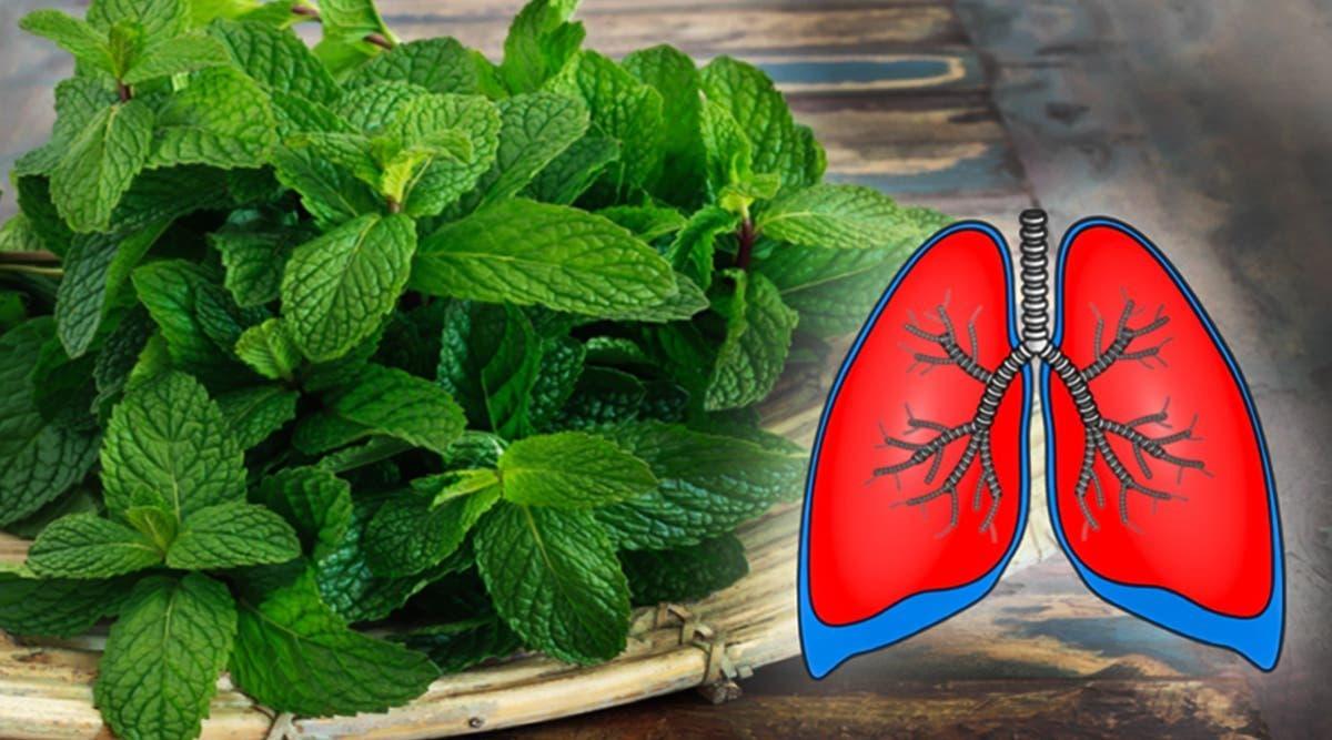 ces-10-plantes-nettoient-vos-poumons-et-previennent-la-bronchite-lasthme-et-le-rhume